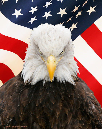 america flag american dream american dream